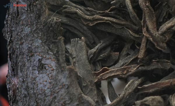 رنگ موی گیاهی با پوست درخت گیلاس و برگ چای تهیه ی رنگ موی طبیعی گیاهی
