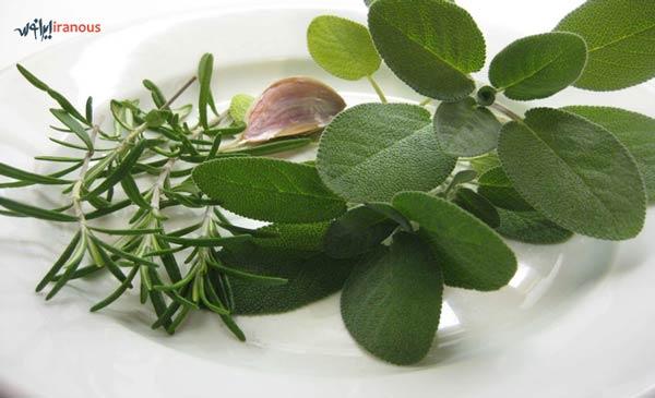 رنگ موی طبیعی با رزوماری و مریم گلی تهیه ی رنگ موی طبیعی گیاهی